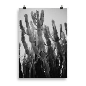Cactus BW by Candima