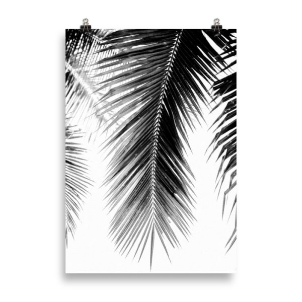 Palm Tree B&W by Candima