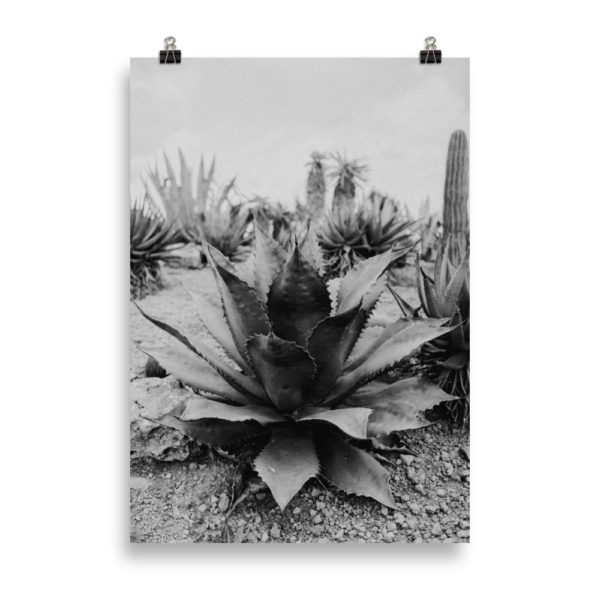 Succulent BW - by Candima
