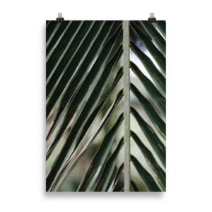 Close Palm Tree Leaf by Candima