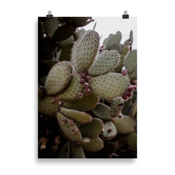 Mallorca Cactus by Candima