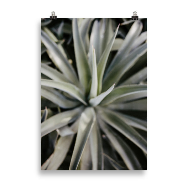 Botanical Close Up by Candima