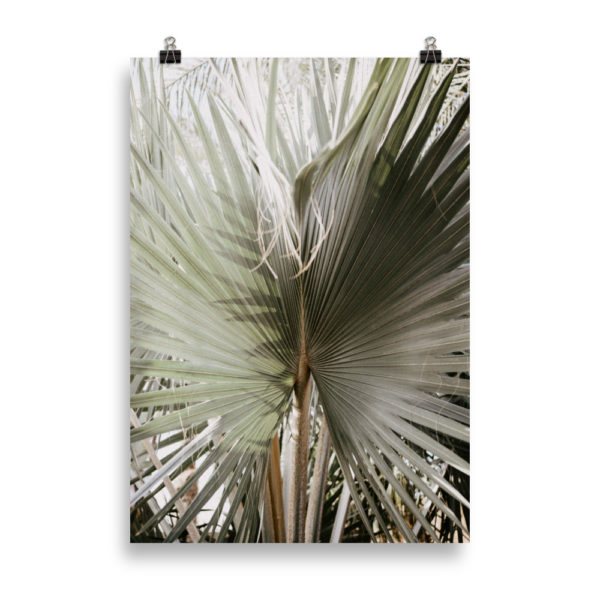 Large Palm Tree Leaf