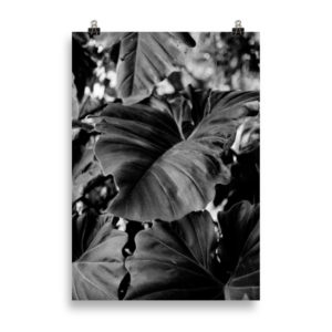 BW Leaf by Candima