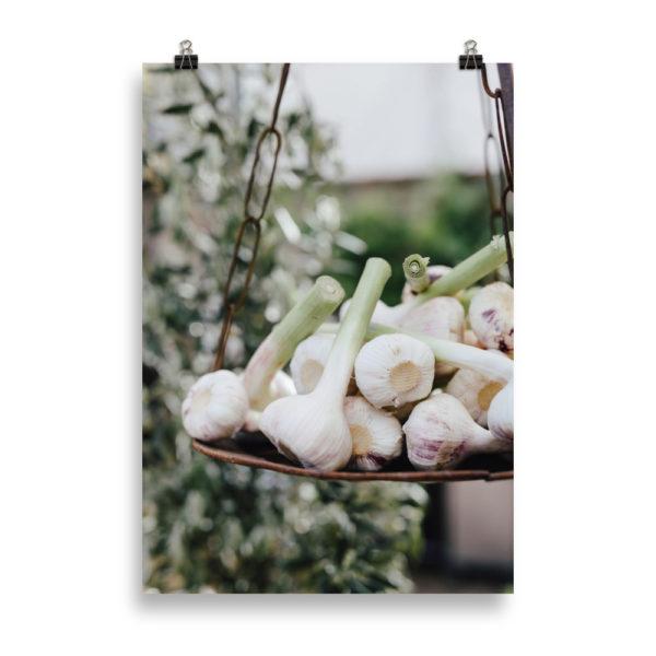 Garlic by Candima