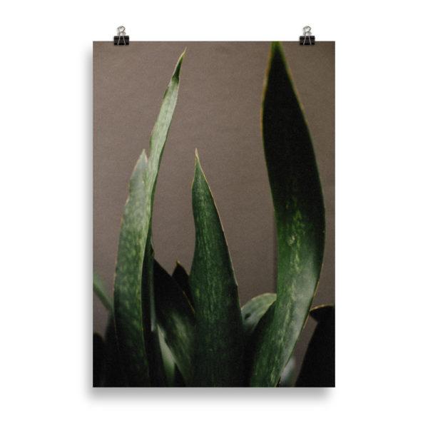 Leafy Green by Candima
