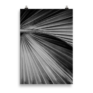 Palm Tree Close Up B&W by Candima