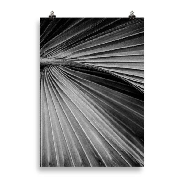 Palm Tree Close Up B&W by Candima