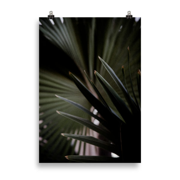 Dark Palm Tree by Candima