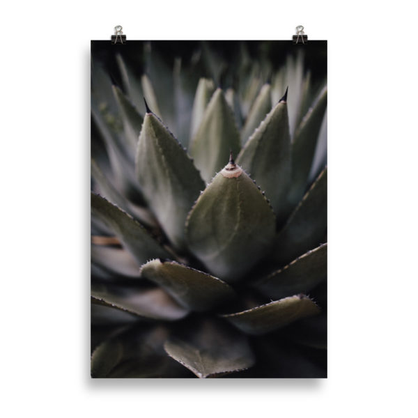 Succulent 02 by Candima