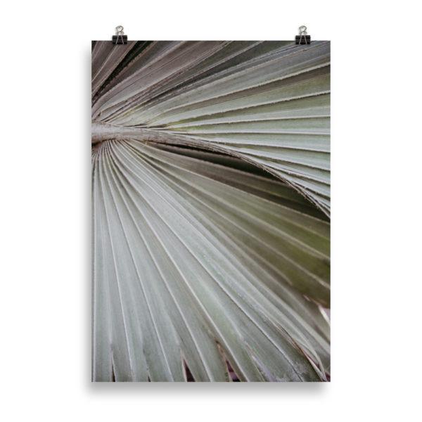Palm Tree Close Up3 by Candima