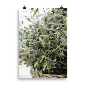 Olive Tree by Candima