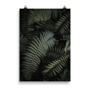 Fern Love by Candima