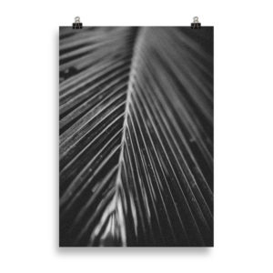 Vintage Palm Tree B&W by Candima