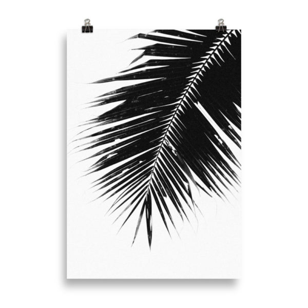 Palm Tree B&W 2 by Candima