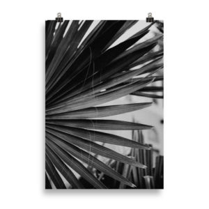 Palm Tree Leaf B&W by Candima