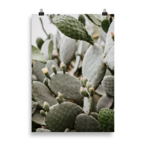 Cactus by Candima
