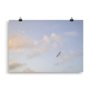 Seagull - Animal Print by Candima