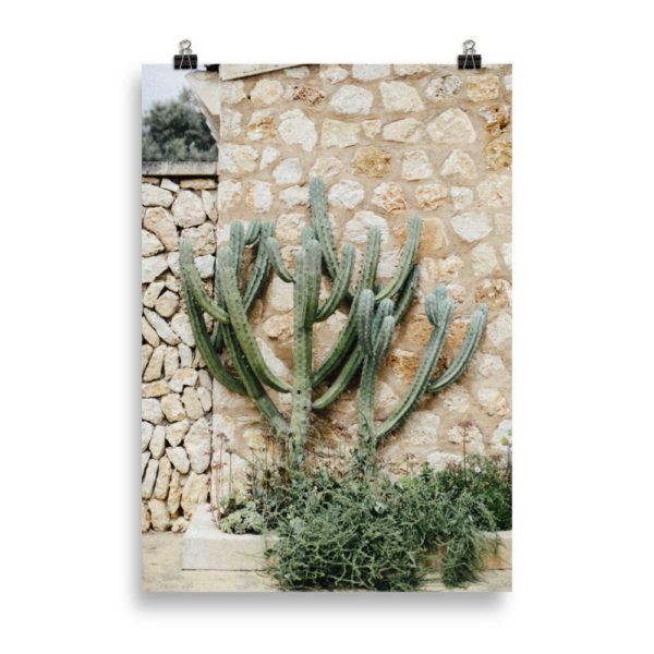 Cactus on the Wall by Candima