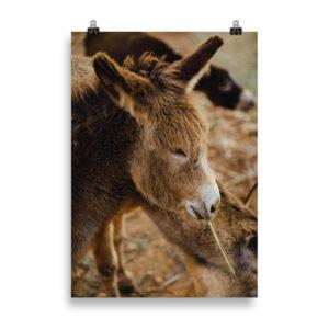 Donkey by Candima
