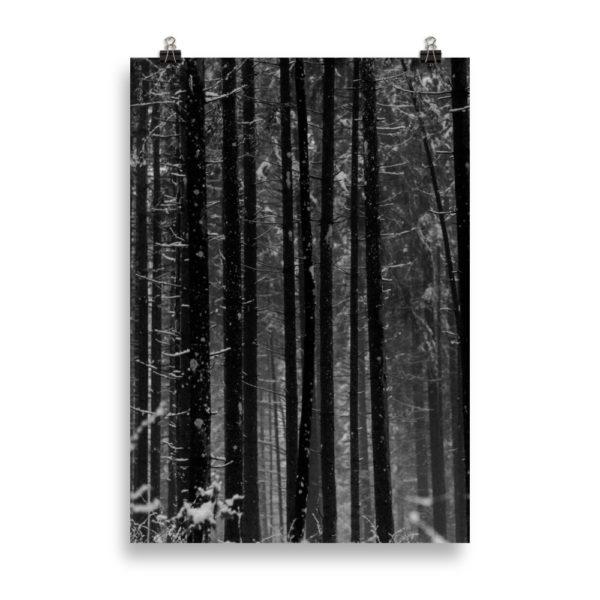 Dark Forest by Candima