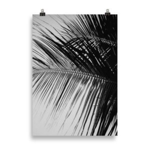 B&W Palm Tree by Candima